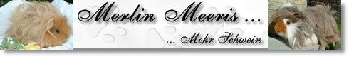 Merlin Meeris - Mehr Schwein